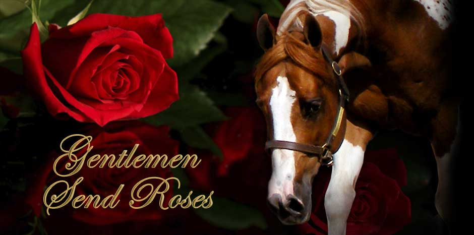 Gentlemen Send Roses - APHA/PtHA Homozygous Stallion