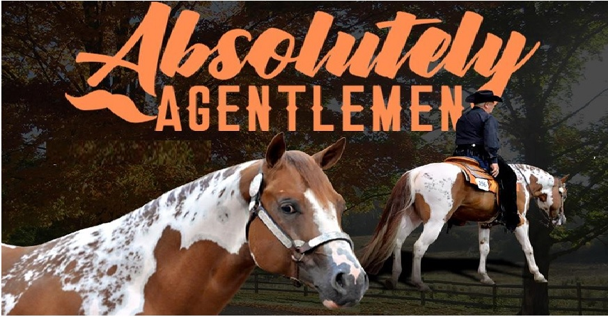 Absolutely AGentlemen - APHA/PtHA Homozygous Stallion